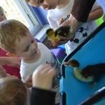 Детские сады в Ашкелоне